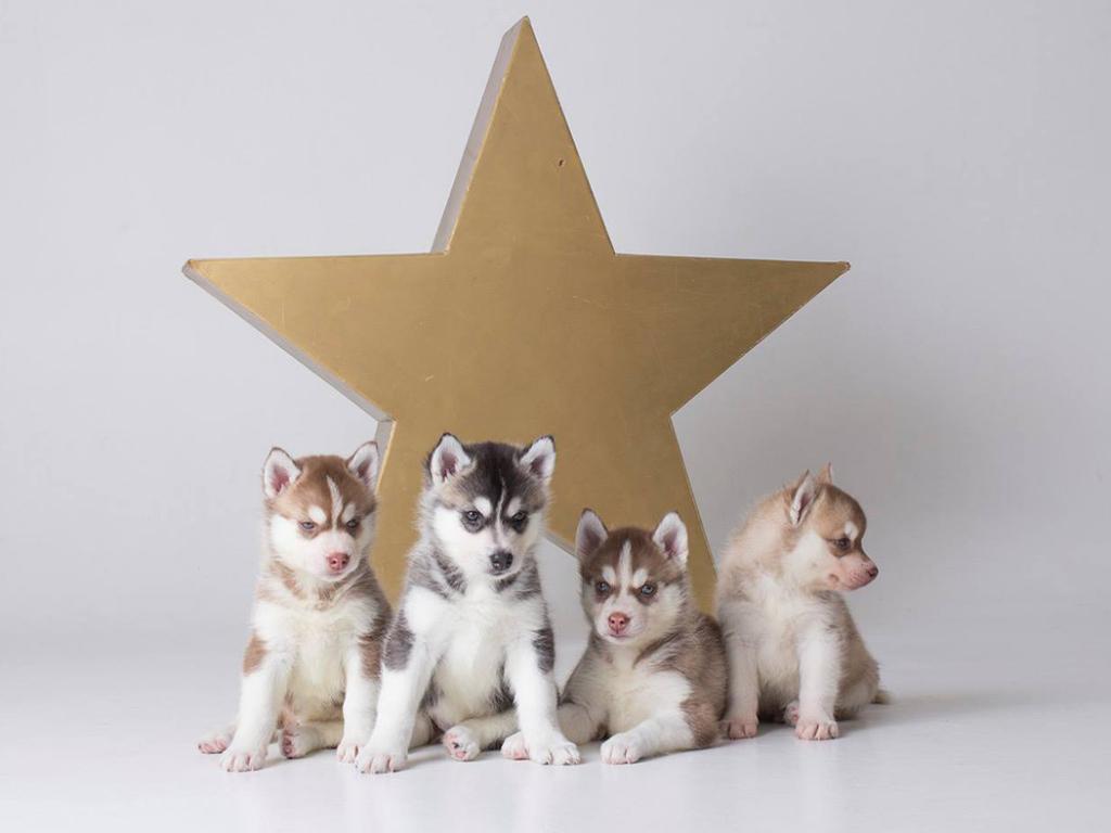 buy puppies online