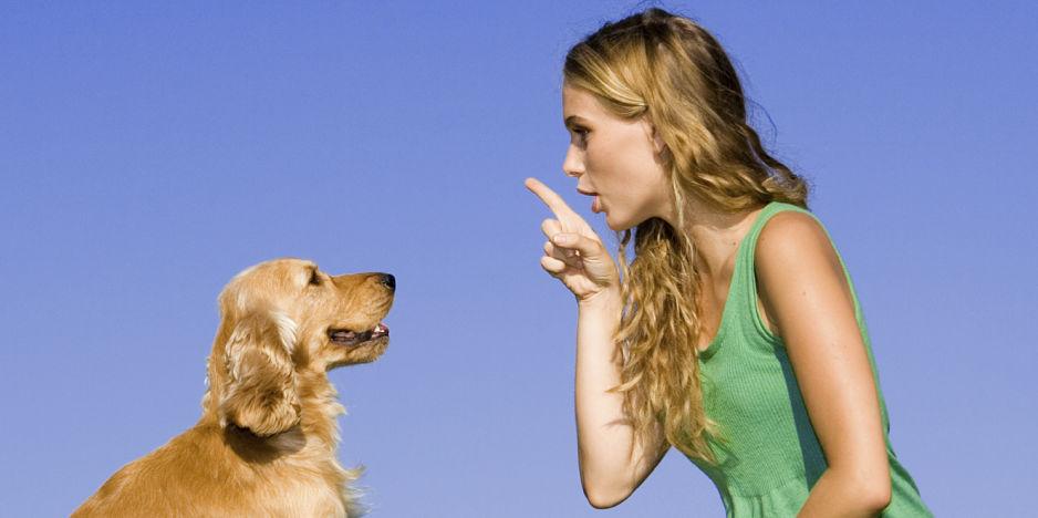 Beszéljünk a kutyák nyelvén