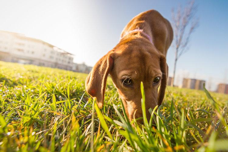 A kutya szobatisztaságra nevelése
