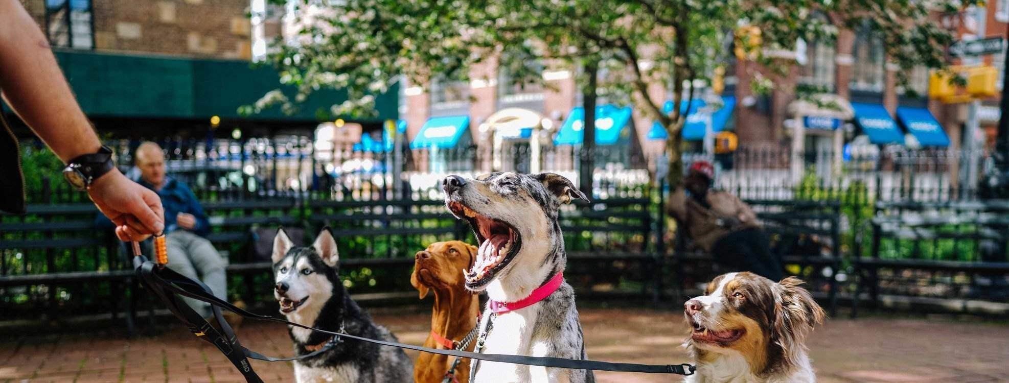 A kutyák fogazata