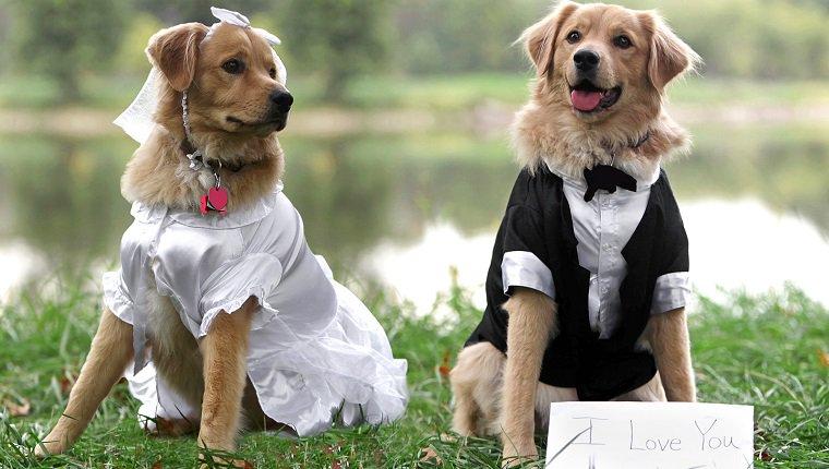 kutyák fedeztetése