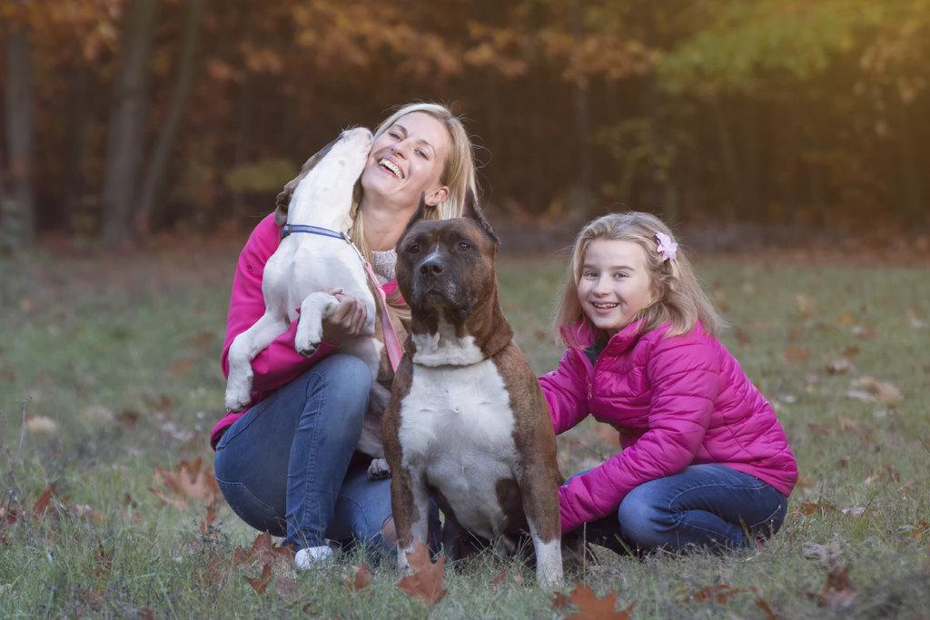 amstaff amerikai staffordhhire terrier kiskutya