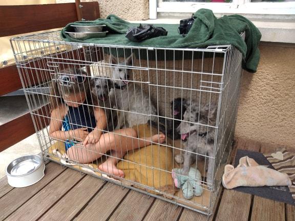 kutya kennel szocializáció